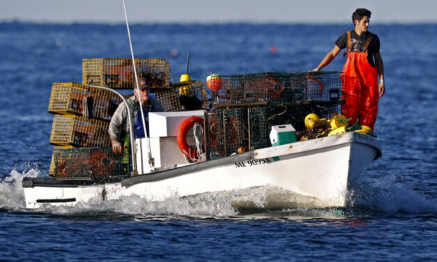 Lobster Boat Tracking Coming To Protect Whales