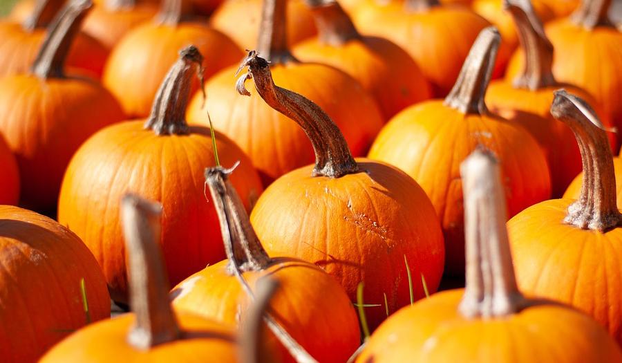 BCUMC Pumpkin Patch Returns On Saturday, September 25th