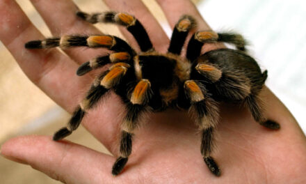 Landlord Finds 19 Tarantulas & A Python Left Behind By Tenant