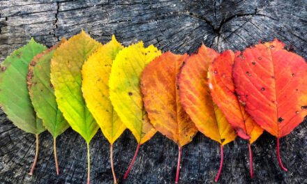 Senior Story Club Shares Autumn Theme Stories And Poems, 10/18