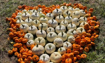 Hart Square Hosts First Annual Pumpkin Patch, Now Till Oct. 9th