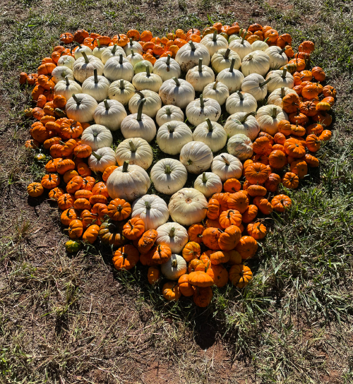 Hart Square Hosts First Annual Pumpkin Patch